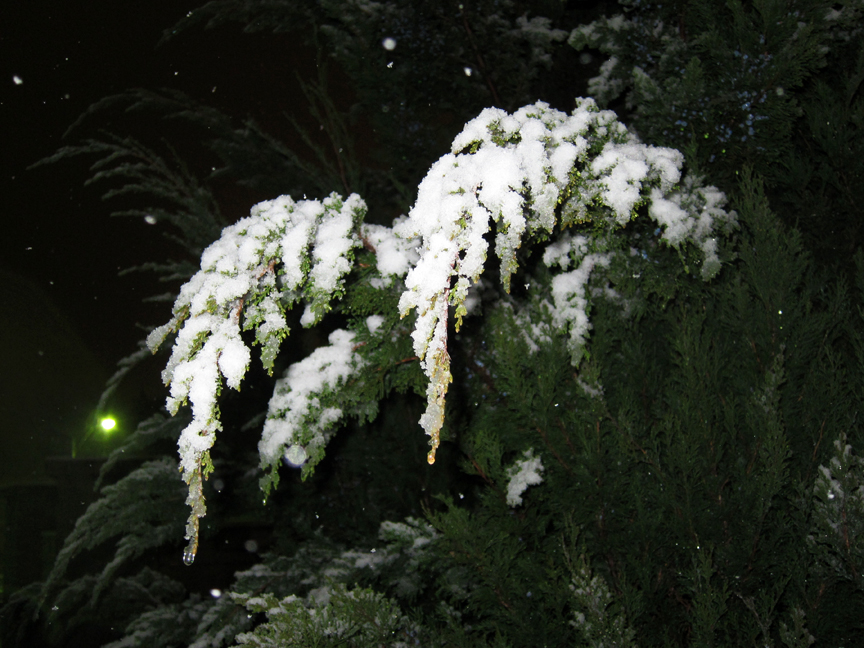 SnowyEvergreen Photos