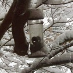 Squirrel In Snow II