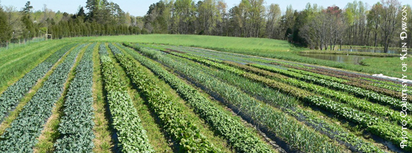 FarmTourArticle 18th Annual Piedmont Farm Tour   2013