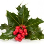 christmas holly 462X305 150x150 Events